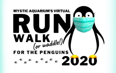 Run Walk Waddle for the Penguins 2020